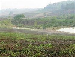 智能园林灌溉系统