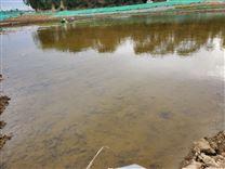 水生态修复底质改良剂