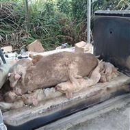wfs无害化处理动物畜禽尸体焚化炉 无烟环保