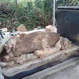 wfs宏利环保源头厂家直供专业定制宠物火化炉