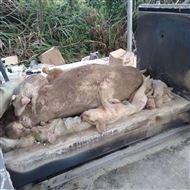 wfs死猪焚化炉    无烟动物焚烧炉  达标排放