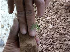 四川石场污泥处理设备