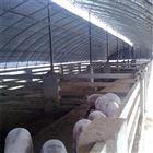養殖場噴霧降溫係統