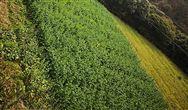 海南省農業農村廳關于加強農作物秸稈綜合利用和禁止露天焚燒工作的通知