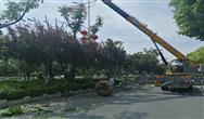 江蘇省濱海縣城管局集聚要素提升城區綠化品質