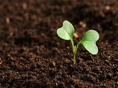 甘肃土壤污染调查,建设用地土壤污染调查,土壤调查报告,土壤调查区哪个部门