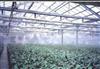 植物园人造雾喷淋杀虫加湿设备