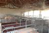 养猪场杀菌消毒降温除臭设备